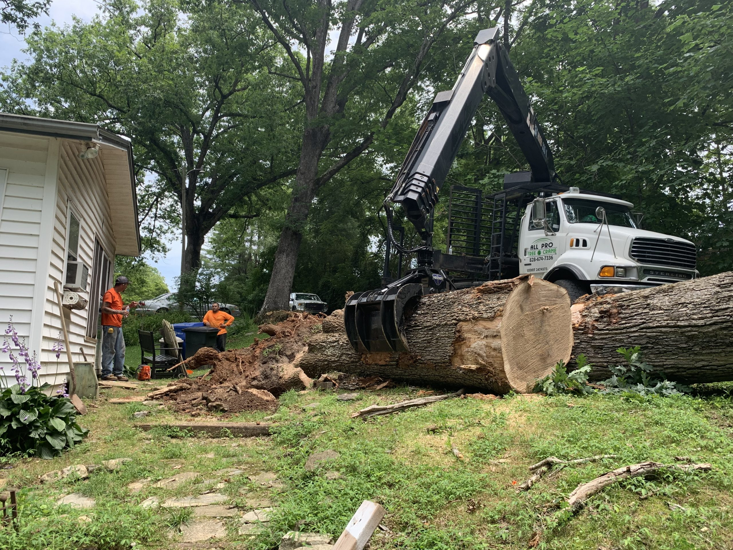 Tree Removal by All Pro Tree and Crane in WNC
