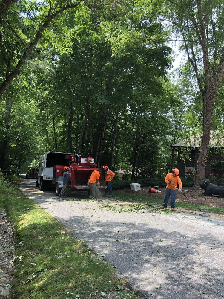 Yelp Review of All Pro Tree and Crane Team cleaning up after tree removal - 5 star review