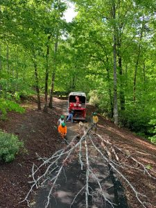 Trimming and Pruning trees in Henderson County and Buncombe County,NC