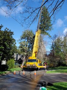 Crane leveling for a tree removal in Hendersonville, North Carolina
