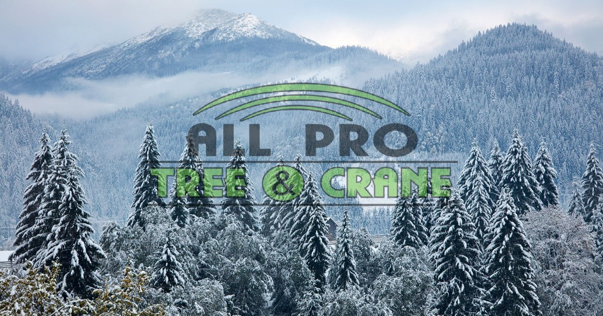 Protect Your Trees in Snow & Ice