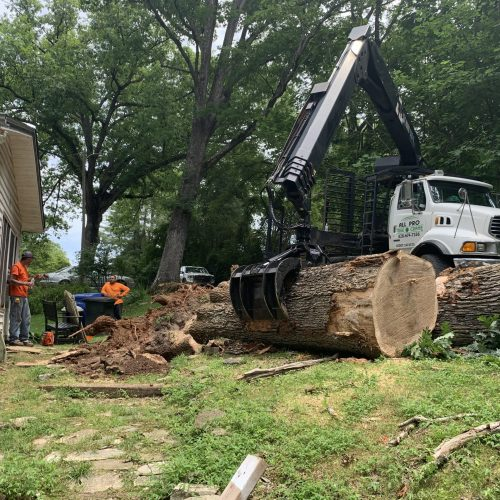 All Pro Tree and Crane Employee-submitted photo of large tree removal in WNC