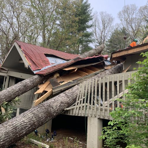 Emergency Tree Services in Henderson, Bunccombe, Transylvania, Polk, and Haywood Counties