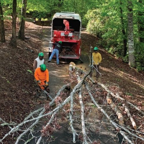 All Pro Tree and Crane Team trimming trees in Henderson County, NC